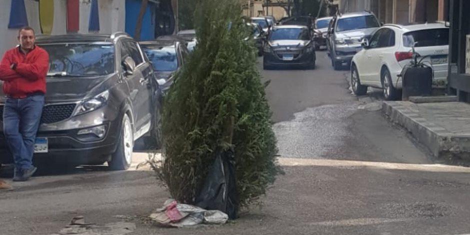 بعد سرقة غطاء البلاعة.. مواطنون يزرعون شجرة منتصف الطريق لعدم السقوط فيها (صور)