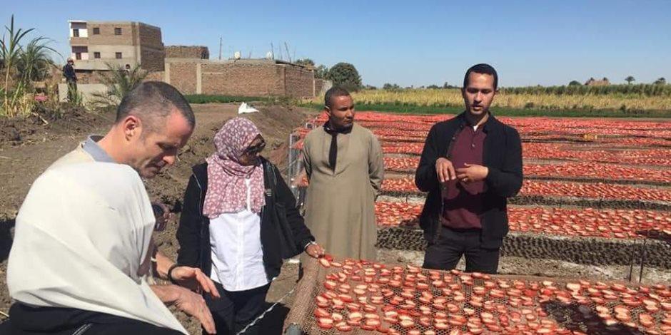 إنتاجها حوالى 8 ملايين طن سنوياً.. تجفيف الطماطم والصناعات الزراعية هو الحلّ