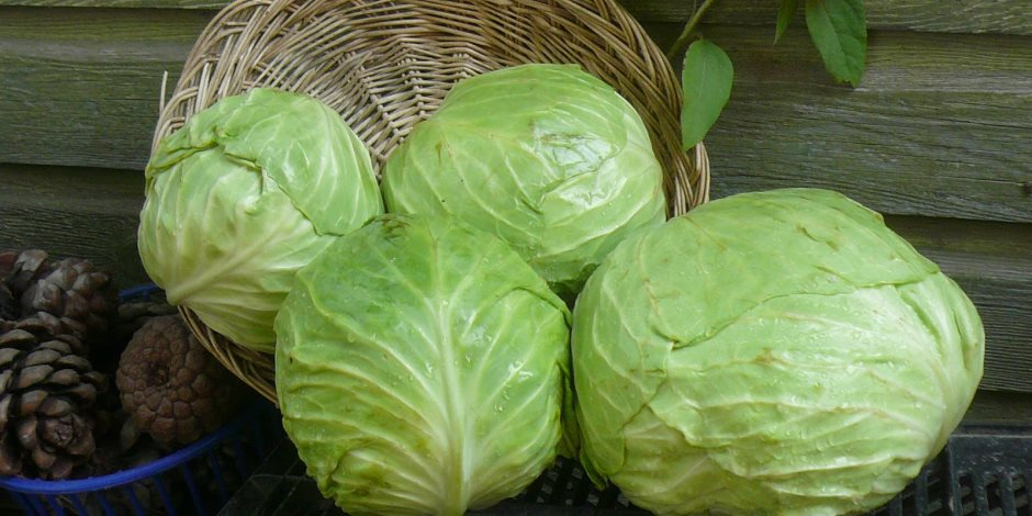 خضروات الشتاء الصحية.. أبرز فوائد الكرنب