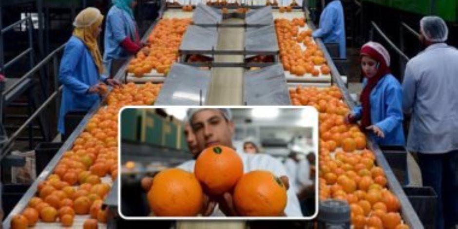 تدفق الشحنات لـ«بكين» رغم كورونا.. البرتقال المصري يغزو الأسواق العالمية