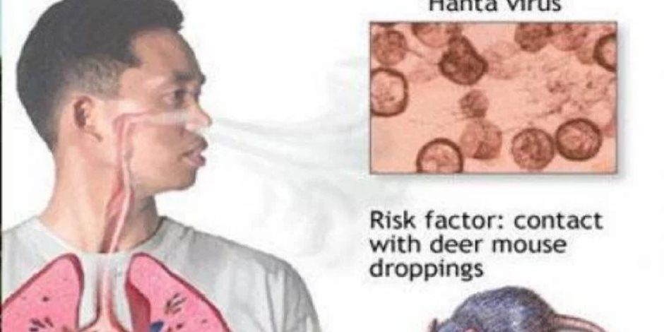 اعرف فرص واحتمالات انتقال فيروس هانتا بين الأشخاص