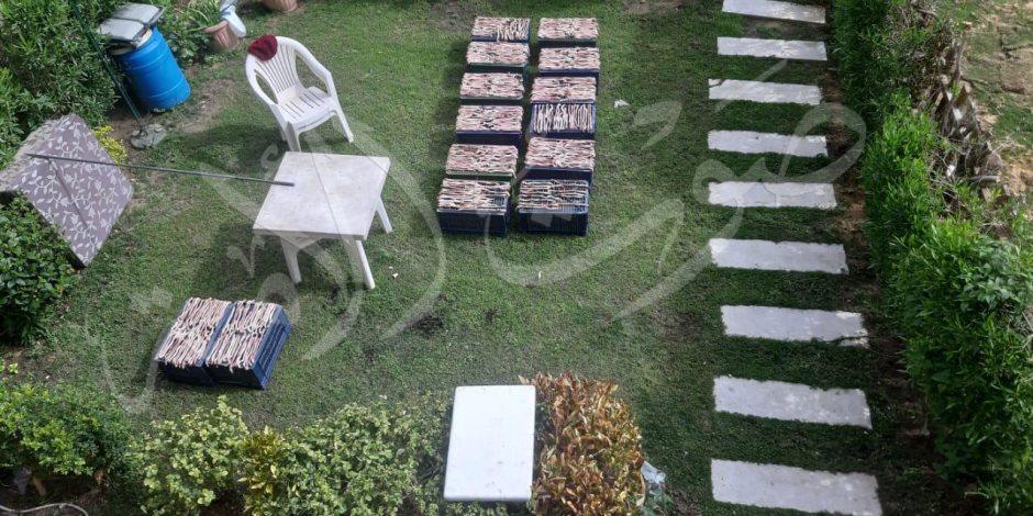 أمن القاهرة الجديدة يضبط شقة يستخدمها صينيين لشواء الثعابين كوجبة غذاء