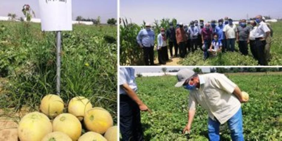 خير وإنتاج بلدنا.. الزراعة تبدأ في تطبيق برنامج وطنى لإنتاج تقاوى الخضر محليا (صور)