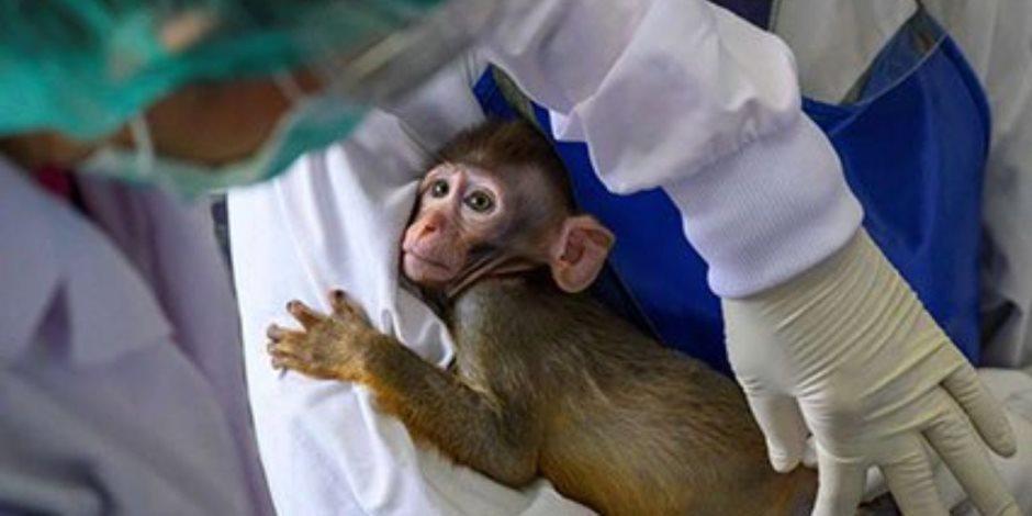 سحب منتجات جوز الهند ببريطانيا بعد اكتشاف استعمال القرود فى جمعها