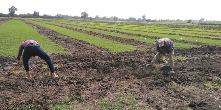 ترشيد ري أراضي الشرقية بتقنيات حديثة في الزراعة.. وتحويل مساحات الري بالتنقيط