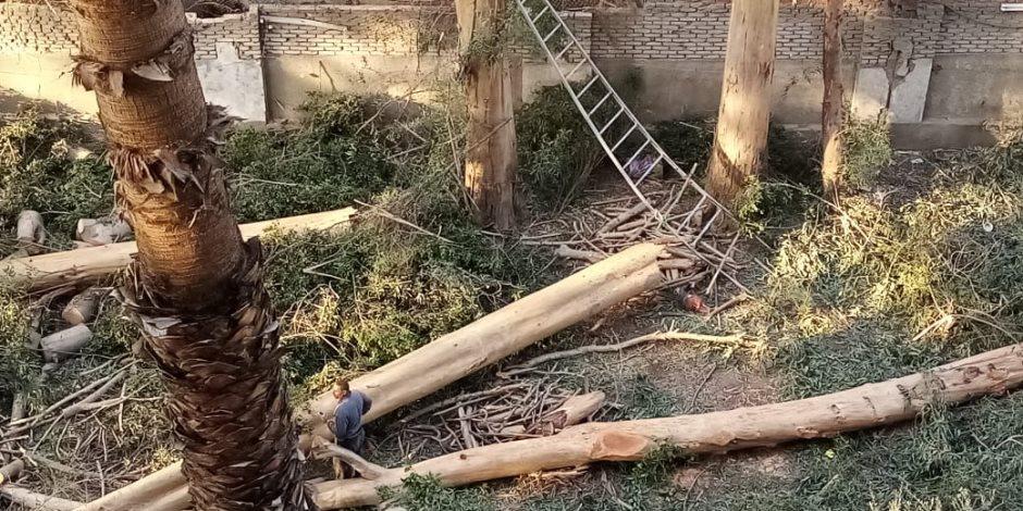 «ذبح أشجار الجيزة».. المحافظة تتخلص من الأشجار بالشوارع والجزر الوسطى بدعوى التطوير