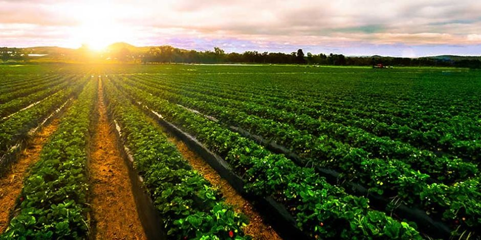 ماذا نكسب من تحديث منظومة الري الزراعي؟