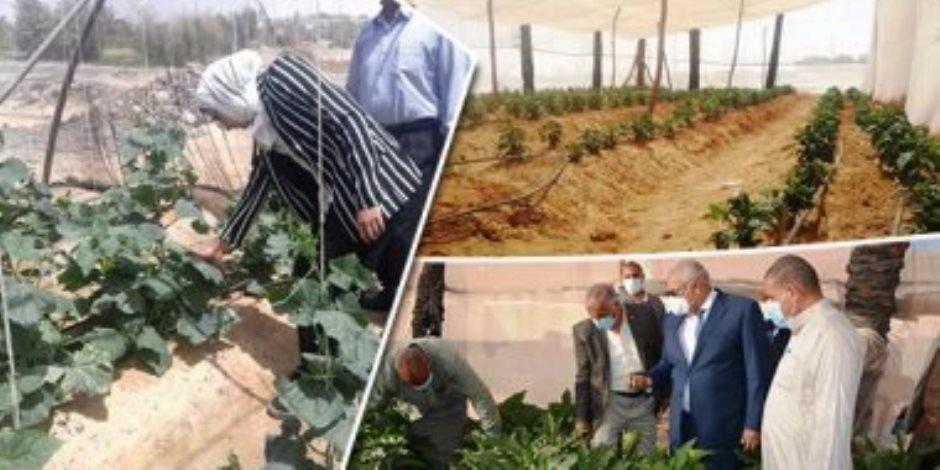 تدوير مفيد للقمامة.. البيوت الزراعية المحمية بالوادى الجديد بديل آمن للصوب