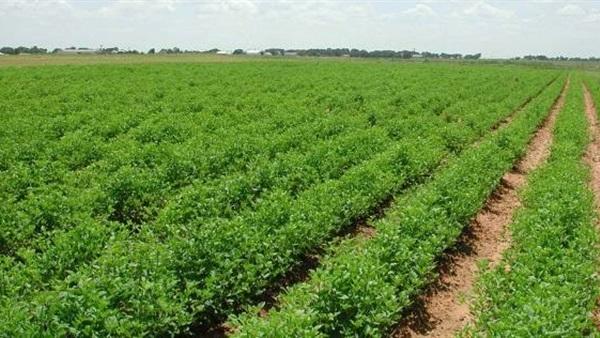 خبير اقتصاد زراعي: «الكارت الذكي» يحصر أملاك الفلاحين