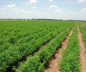 الزراعة تعلن إجراءاتها للحفاظ على المحاصيل من أمطار الموسم الشتوى