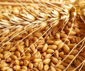 رصيد صومعة الحبوب والغلال للقطاع العام بميناء دمياط 130634 طنا