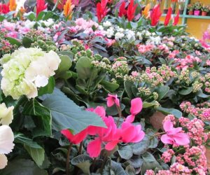 تركيب نظام ري مناسب.. 7 خطوات لزراعة سطح منزلك