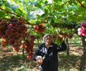 تعرف على أسعار الخضروات والفاكهة اليوم الأربعاء 15-7-2020.. العنب بـ 4 جنيهات للكيلو