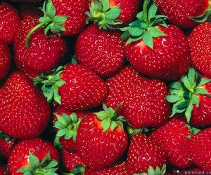 من 10 محاصيل.. الزراعة: تصدير 41 ألف شتلة فاكهة لـ3 دول