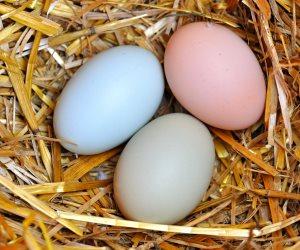 أسعار الدواجن والبيض واللحوم اليوم الإثنين 20-1-2020.. كرتونة البيض البلدي بـ 39 جنيها