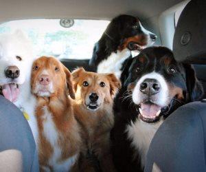 """أشهرهم """"هول و روى""""..الكلاب التي يقتنيها المصريين تركت علامات في السينما والحياة"""