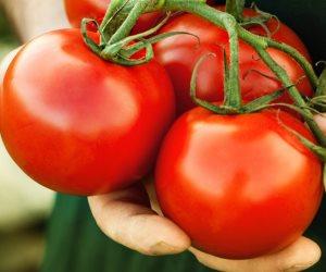 نزل الخبر كالصاعقة على المزارعين.. لماذا تستورد مصر «طماطم» من الأردن رغم عدم الحاجة لها؟