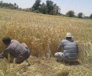 """""""زراعة الشرقية"""": إغلاق صومعة وشونة بالعاشر وبلبيس ولا أضرار على محصول القمح"""