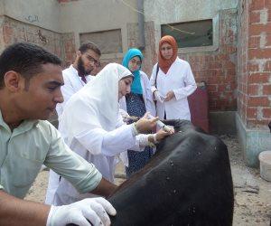 الزراعة: تحصين مليون و910 رأس ماشية ضد الأمراض الوبائية خلال الشهر الماضي