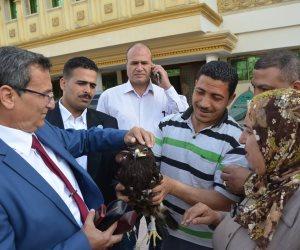 مدير «طب بيطري» كفر الشيخ يفجر مفاجأة بشأن نسر المحافظة