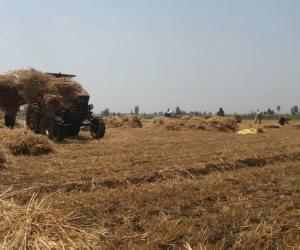 معركة الاكتفاء الذاتي للمحاصيل الزراعية تحت القبة.. هل تنتصر الحكومة؟