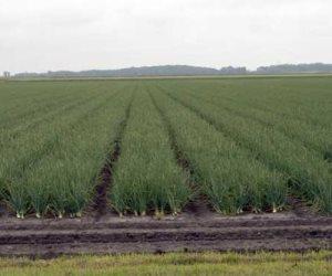 أنواع الري للتربة الزراعية.. تعرف عليها