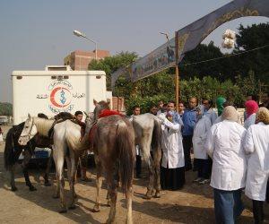 مصر بدون أطباء بيطريين في 2025.. والنقابة تطلق صافرة الإنذار