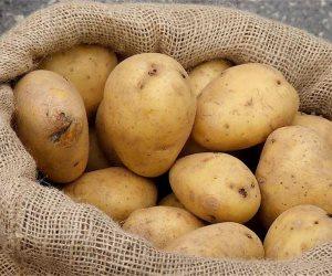 رئيس الحجر الزراعي: نجحنا في تصدير 98 ألف طن بطاطس إلى السوق الروسي