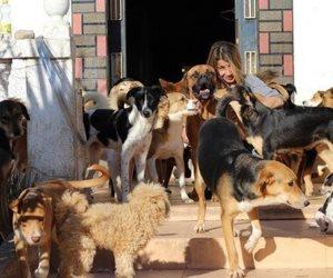 """""""خلصنا مشاكل البني آدمين؟"""".. مشروع قانون لحماية الحيوان على أبواب مجلس النواب"""