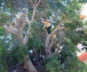 «اتحضر للأخضر».. تفاصيل أول حملة لنشر الوعي البيئي برعاية الرئيس السيسي في س & ج
