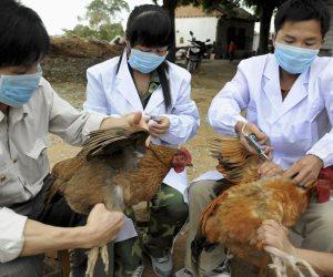 الفلبين تنشر قواتها فى إقليم ثان لمكافحة إنفلونزا الطيور