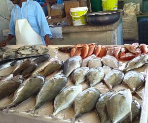 تعرف على أسعار السمك اليوم السبت 24-8-2019.. انخفاض سعر البلطي