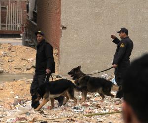تستخدم لحفظ الأمن.. تعرف على تاريخ الاستعانة بالكلاب البوليسية في مصر
