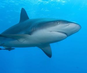 وزارة البيئة: هجوم القرش بالبحر الأحمر سببه ممارسات البشر الخاطئة