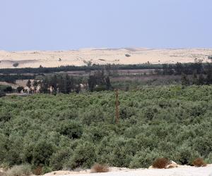 محافظة دمياط تدرس 1000 طلب تقنين لأراضي