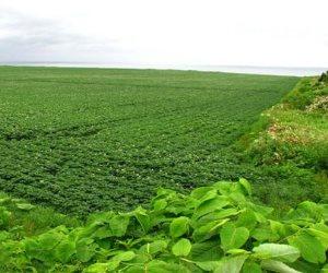 أحكام ودعاوى: عدم خضوع الربح الناتج من بيع الأراضي الزراعية للضريبة على الدخل (مستند)