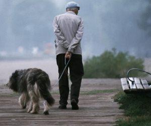 """الحيوانات الأليفة  وخصوصا """"الكلاب"""" تنقذ حياة 3.4 مليون شخص"""