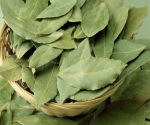 ورق اللورا.. نبات عطري تعرف على فوائده