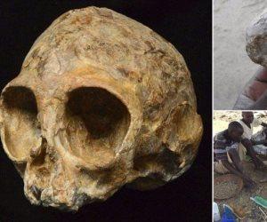 جمجمة قرد وليد تلقى الضوء على الماضى السحيق للجنس البشرى
