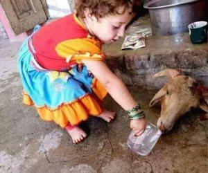 شاهد.. طفلة تحاول إحياء خروفا بعد ذبحه (صورة)