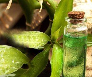 فوائد رائعة لزيت شجرة الشاي... علاج حب الشباب و قشرة الرأس ومزيل لرائحة العرق