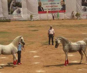 س & ج أهم ملامح مهرجان الخيول العربية فى دورته الـ24 بمحافظة الشرقية
