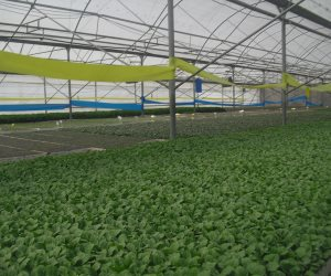 «الصوب الزراعية» أمل مصر لمواجهة الزيادة السكانية