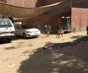 الكلاب والتكاتك تثير الرعب بين أطفال مجمع مدارس المنيب (صور)