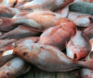 أسعار السمك اليوم الخميس 5-3-2020.. الجمبري الجامبو يبدأ من 400 جنيها للكيلو