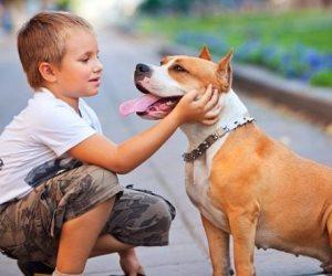 هل يمكن للحيوانات الأليفة نقل كورونا إلى البشر؟