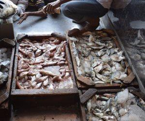 مشروع قانون الصيد الجديد.. هل يحل مشاكل الزريعة والصيد الجائر؟
