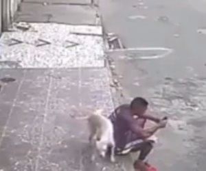 القبض على عاطل يروع طالبات مدرسة البساتين بكلب شرس