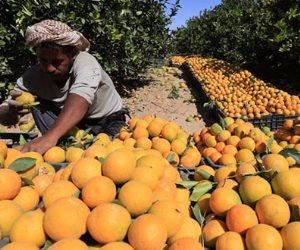 ارتفاع صادرات البرتقال لـ 1.760 مليون طن بزيادة 60 ألفا