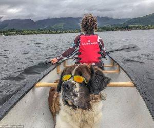 الكلب لف العالم واحنا لسه.. عمره 4 سنوات يسافر أسبوعيا مع أصحابه للإبحار وتسلق الجبال والتخييم